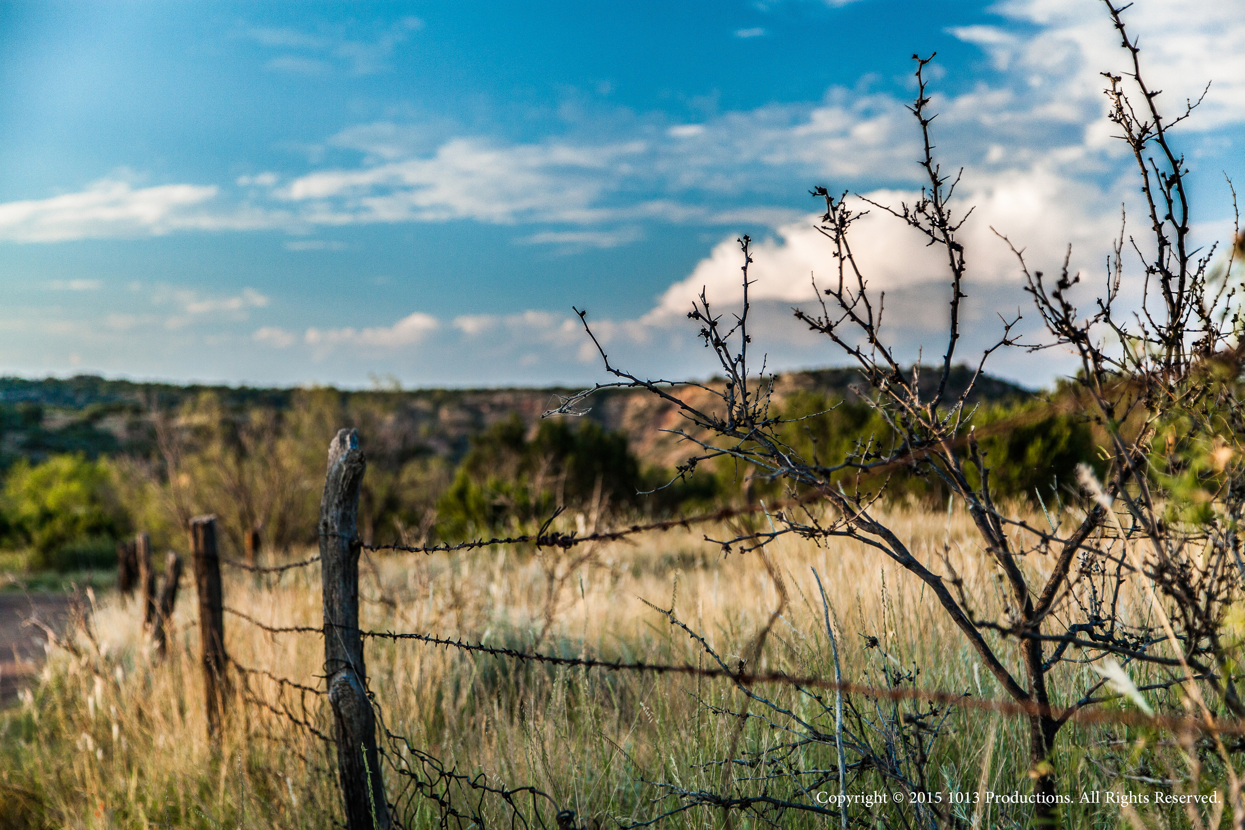 Dickens_2014-fence-c.jpg