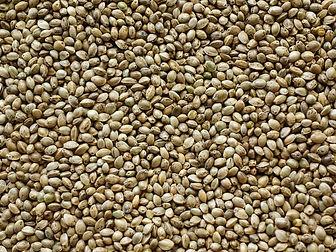 hemp-seed-texture-1625183.jpg