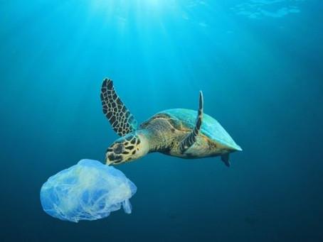 8 giugno 2020: XVIII Giornata Mondiale degli Oceani