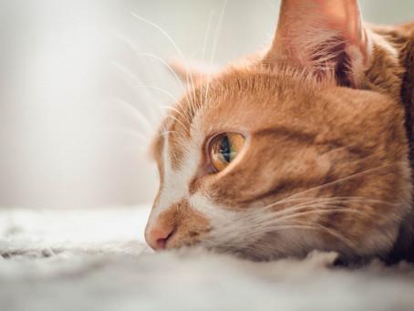 Como cuidar de cães e gatos idosos?