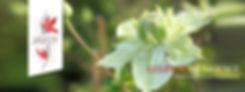 Visuel Site Internet O'Voile (003).jpg