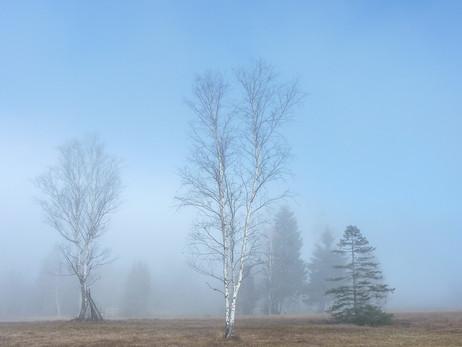 Hochmoor am Morgen