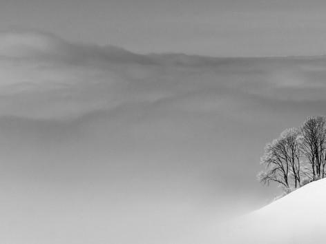 Bäume am Rand des Nebelmeers