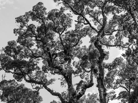 Baumkronen in Urwaldlichtung