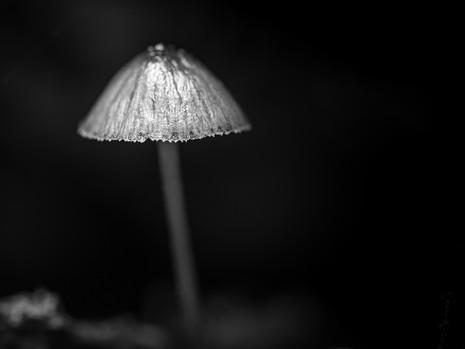 Ein Pilz im Urwald