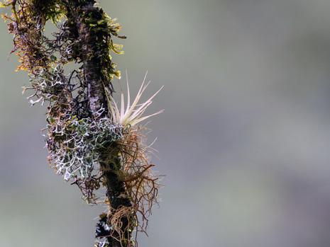 Urwaldflora