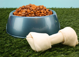 Keep Thanksgiving Happy!  Ten Foods You Should Never Feed Your Pup!