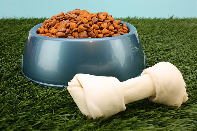 Dog Food in a dog bowl with a dog bone on grass