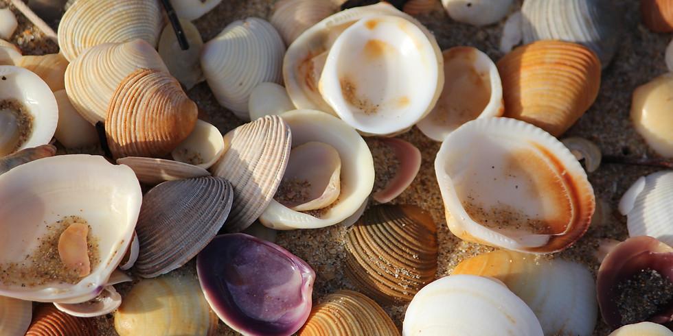 Knutselen en spelen met schelpen en zand