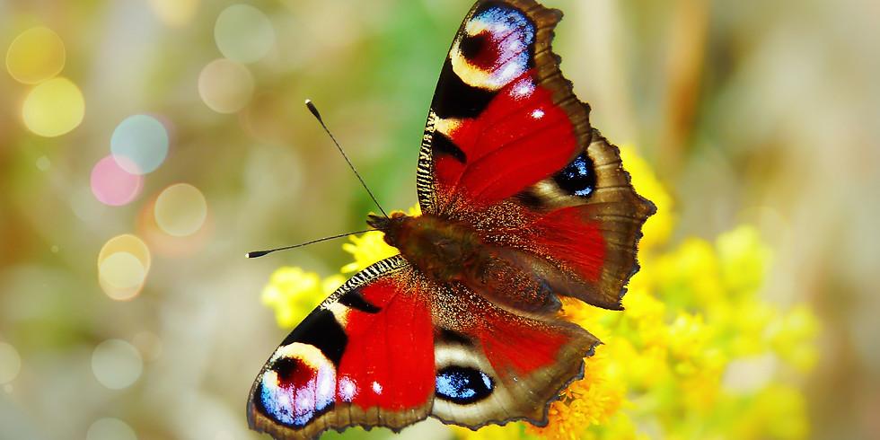 Vlinders (VOLZET)