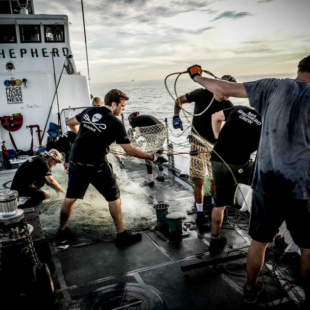 Sea Shepherd 3.png