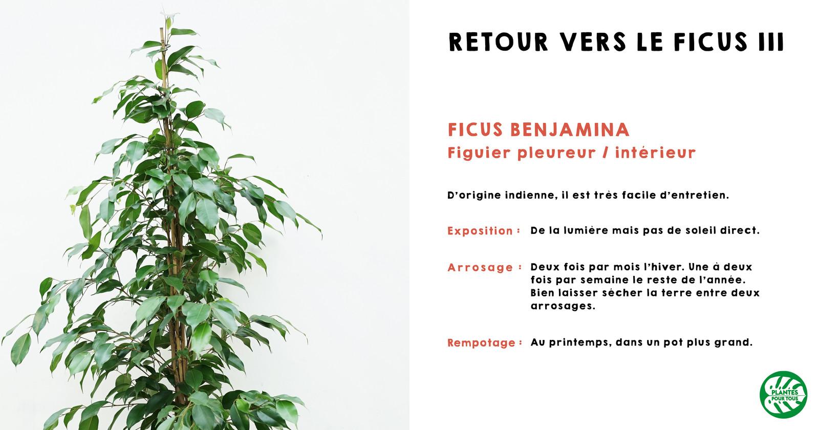 plantes pour tous | fullscreen page