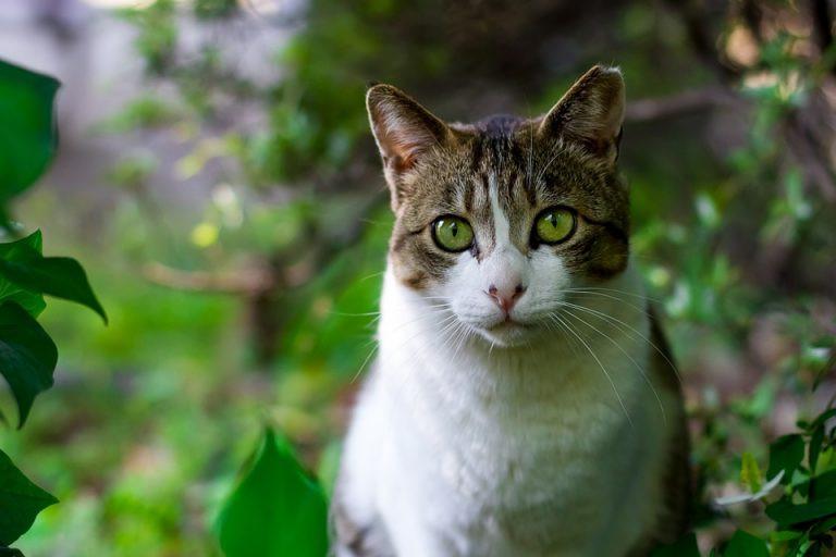 Imagem Gato em meio à natureza