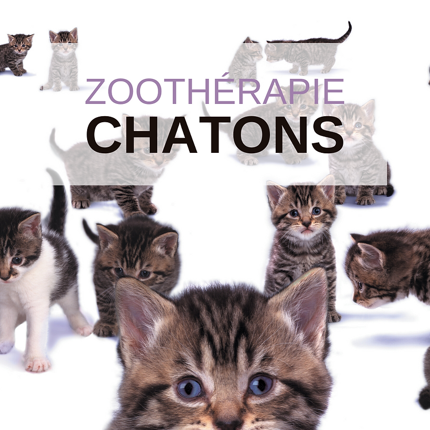 Zoothérapie - Chatons
