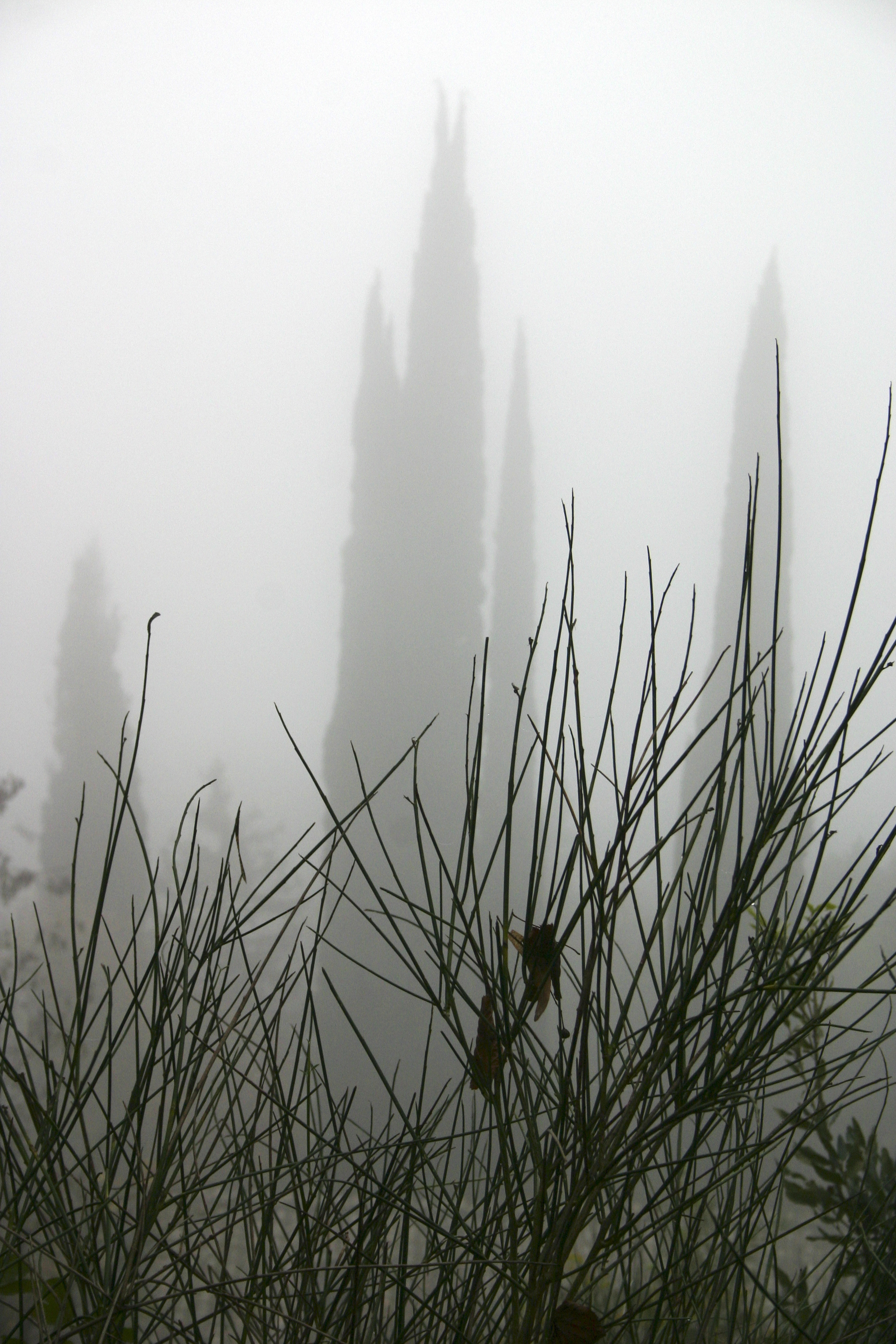 Nebia, Corciano, Italy