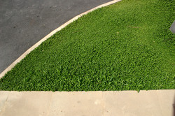 Curb and grass, Sicily