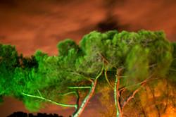 Fiumicino Trees, Italy