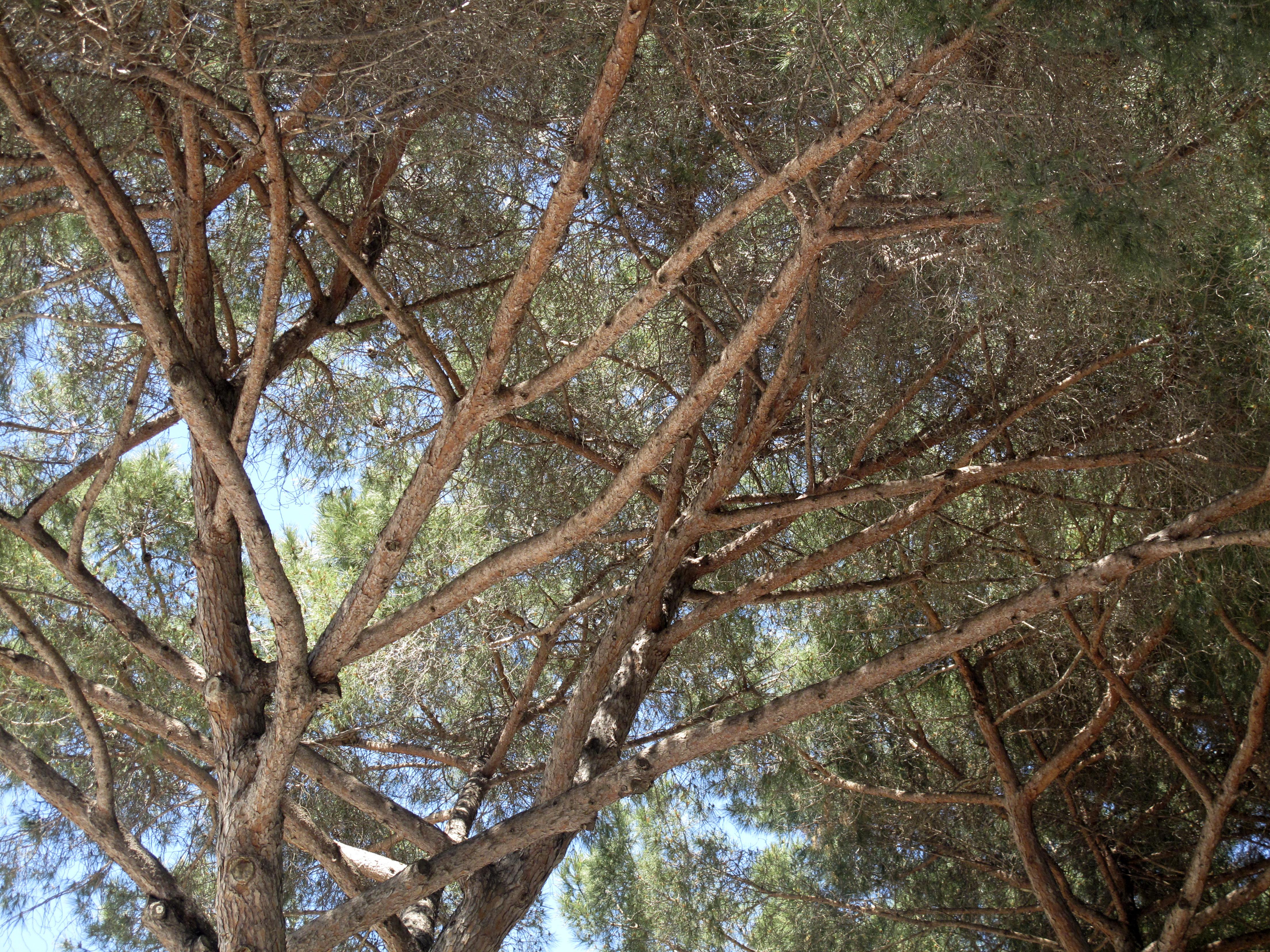 Canopy, Rome, Italy