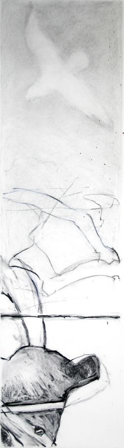 Erie gull