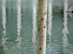Vertical tree, Crystal Bridges