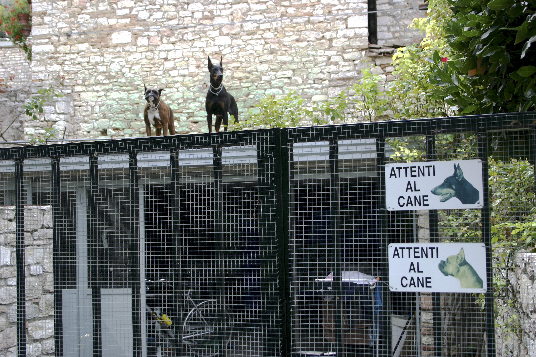 Attenti al Cane, Corciano, Italy
