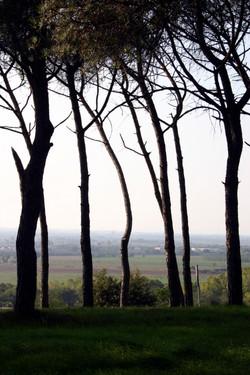Trees, Tresemeno, Italy