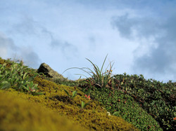 Moss, Mt Washinton, New Hampshire