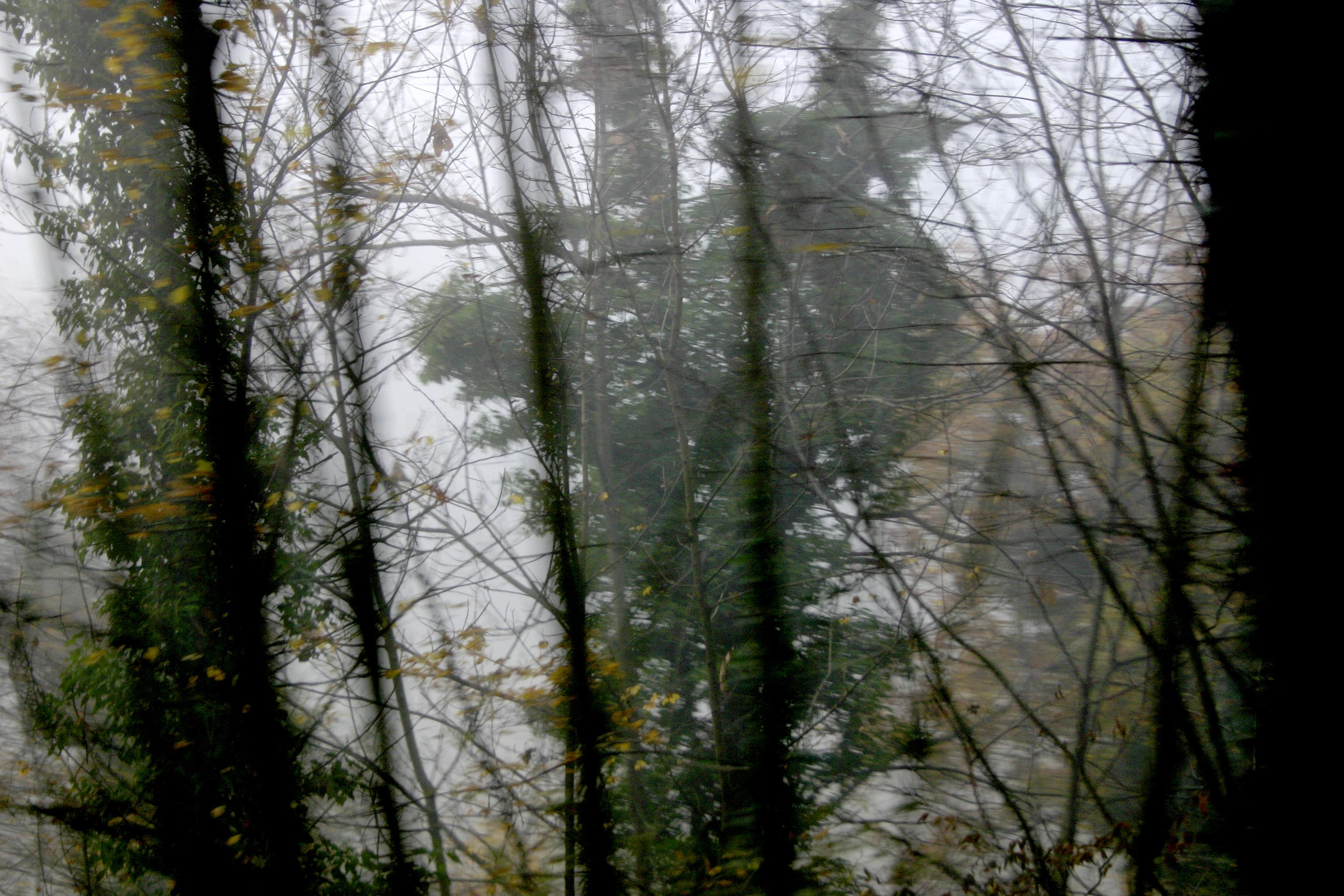 Trees and nebia, Corciano, Italy