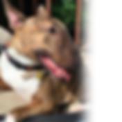 Bruskey the dog