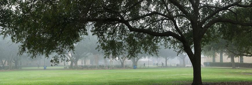 tree-fog.jpg