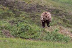 NGSE_AlaskaB_JackBorowiak-6119
