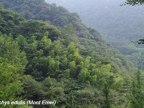 Voyage botanico-touristique dans le Sichuan (juin-juillet 2017)