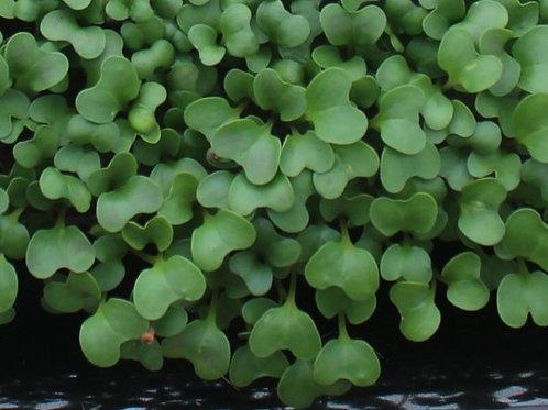 broccoli 50g