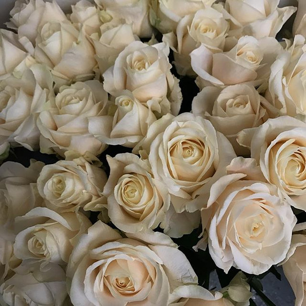 One of my new favourite roses #fourseasons a stunning large headed rose which I'm looking forward to using in 2018 xx