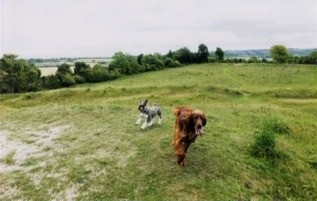 Dog Walking in Totternhoe from Sewell Greenway