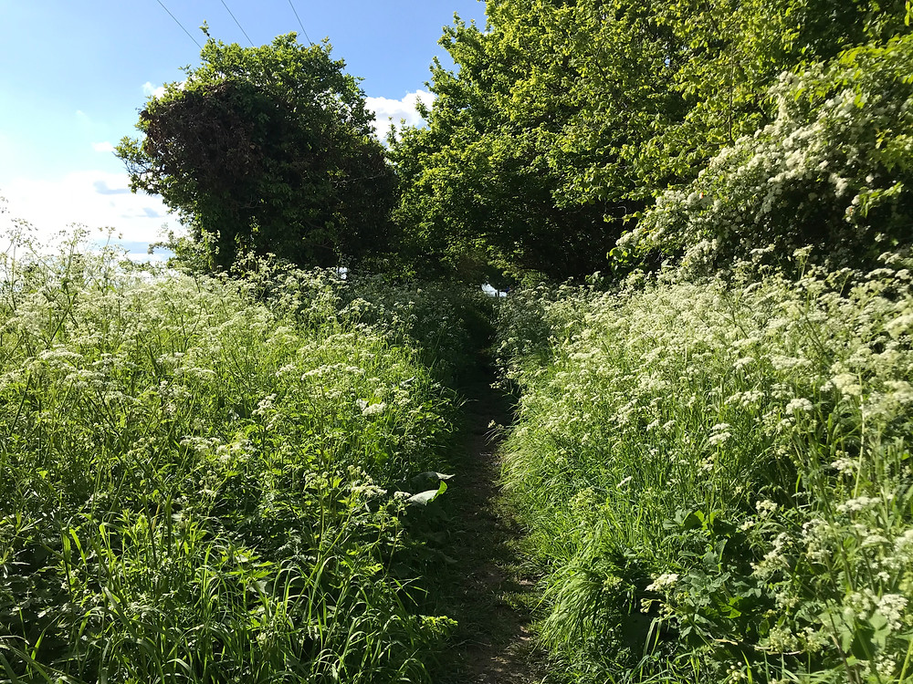 Totternhoe - Eaton Bray public footpath great for dog walks