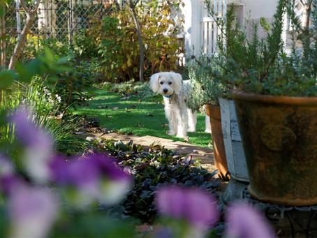 10 Top Tips for making your garden dog friendly