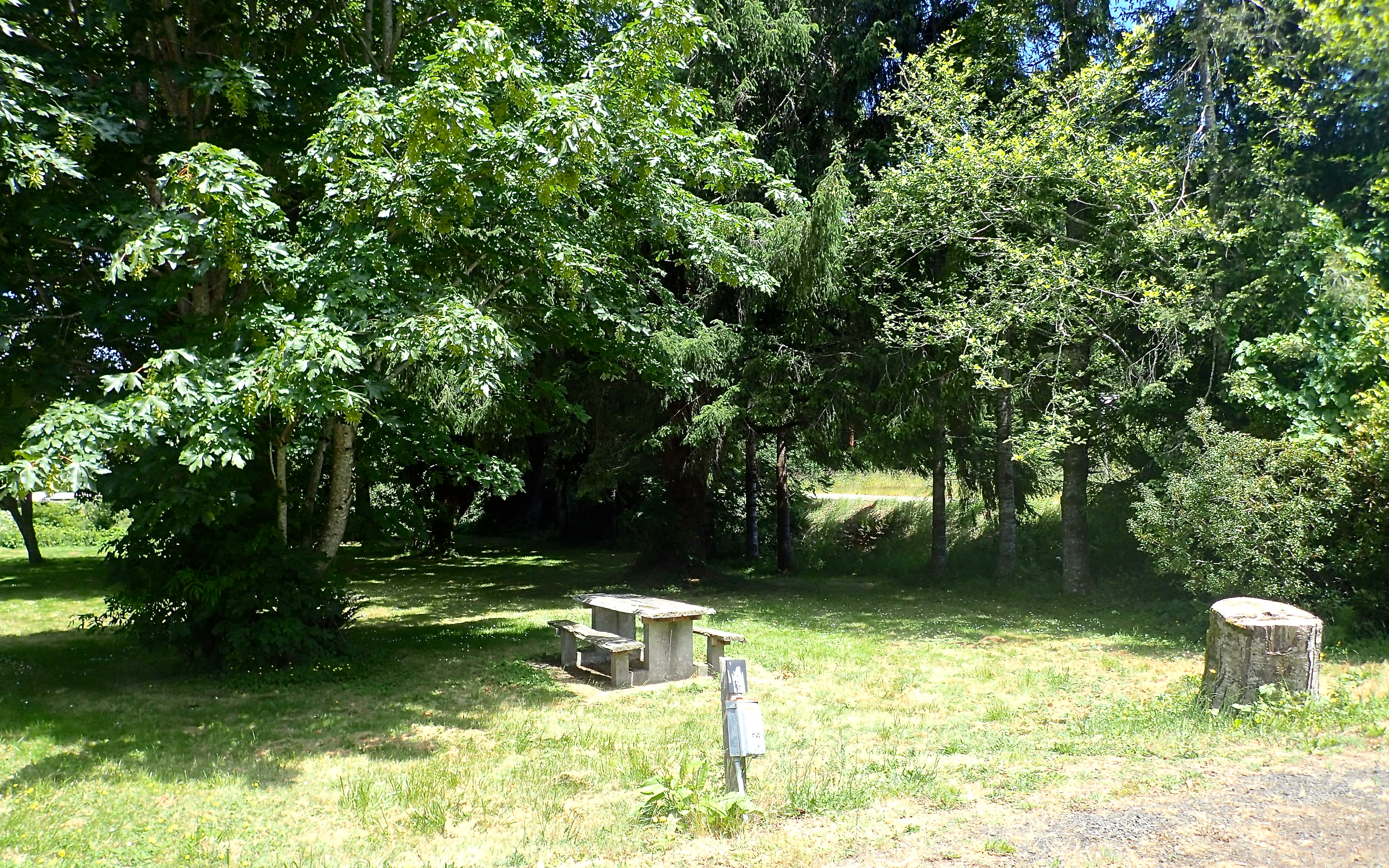 Many treed campsites are available!