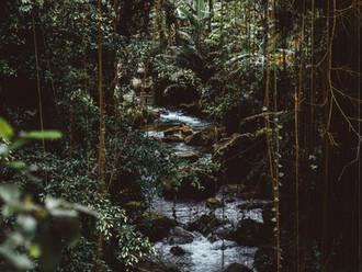 Jungle Diaries | Wildeye Adventures Media