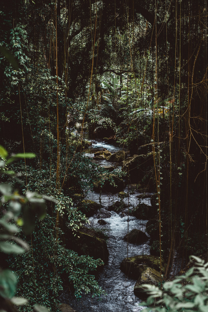 Learning from Ayahuasca Empathically & Journeying 2/28/21 via Psychometry