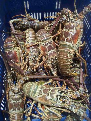 red-lobsters.jpg