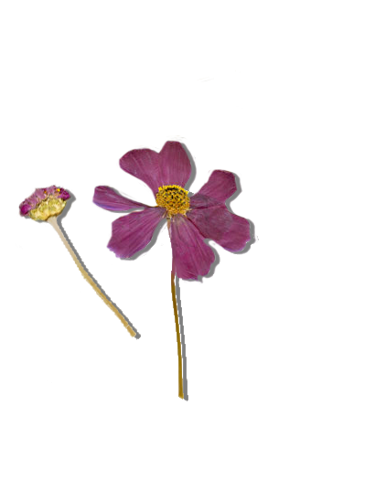 a32e7c9807eca5aefceae04bd327f301