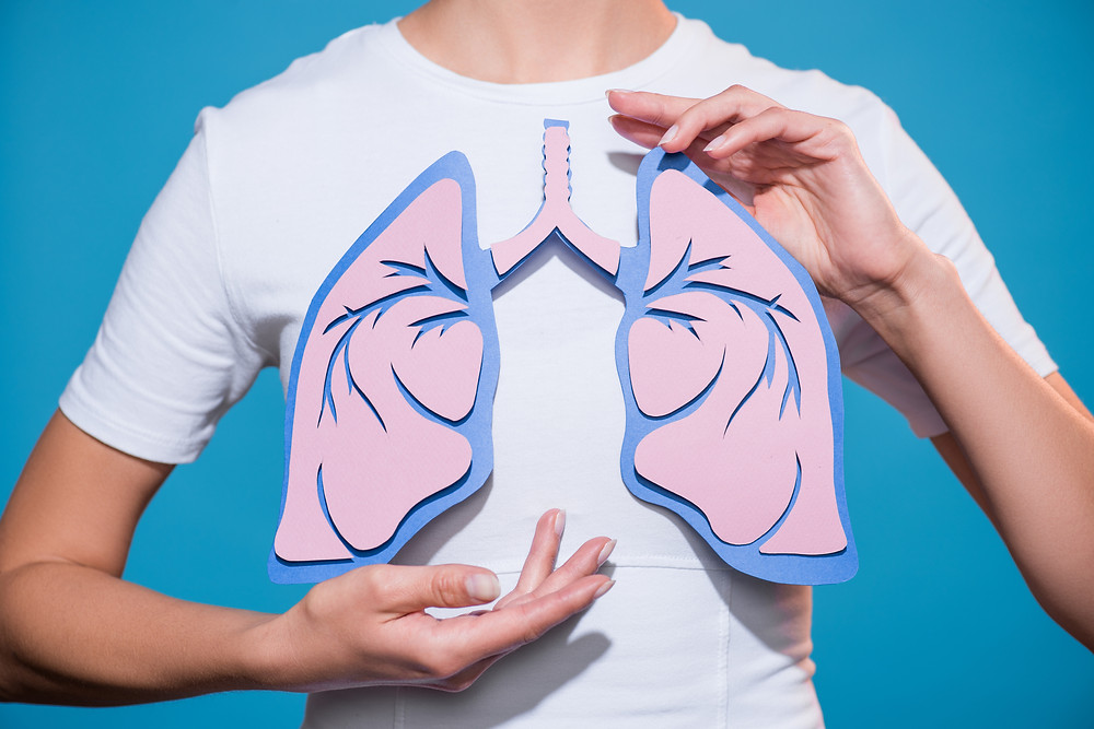 poumon dessin