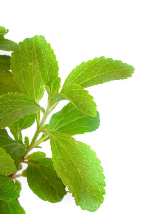 Stevia Rebaudiana - natural sweetener cl