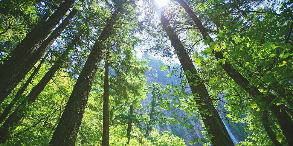 view-of-the-sky-through-trees-in-a-fores