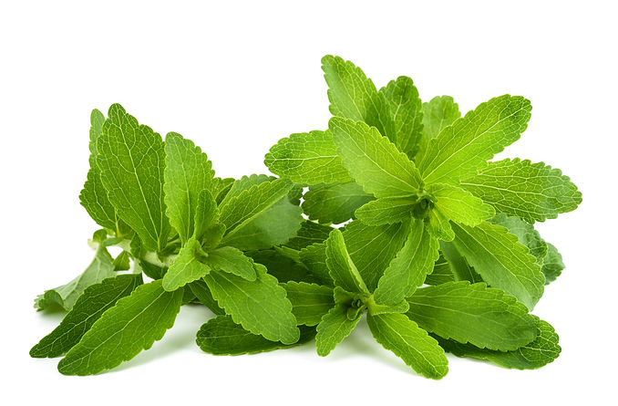 Stevia rebaudiana sprigs  isolated on wh