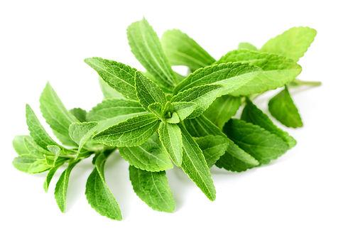 fresh stevia isolated on white backgroun