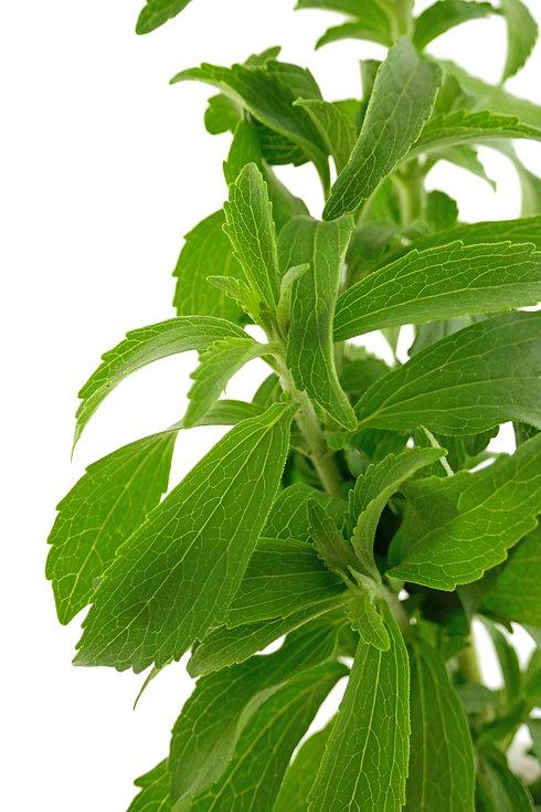 Stevia herb. green twig stevia plant iso