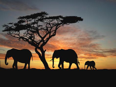 Tanzânia, um destino exótico que combina natureza, aventura e cultura.