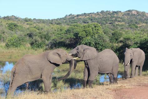 Phinda Private Game Reserve, a experiência de um autêntico safári na África do Sul!